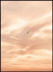 Affiche avec cadre d'un oiseau volant dans un ciel nuageux rose.
