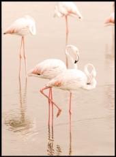 Photographie de magnifiques flamants roses se reposant dans l'eau.